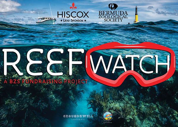 REEF Watch.jpg